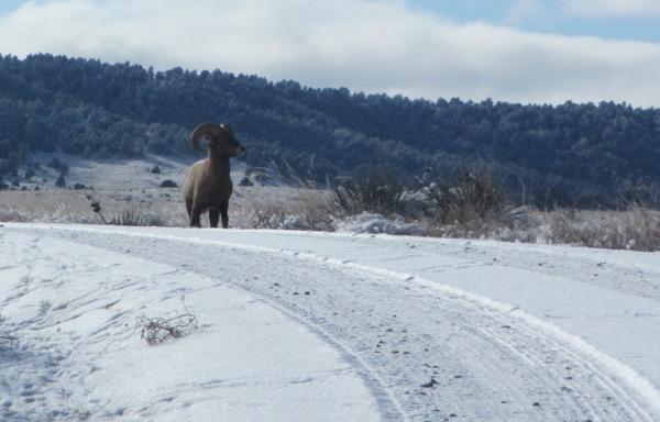 ram on road
